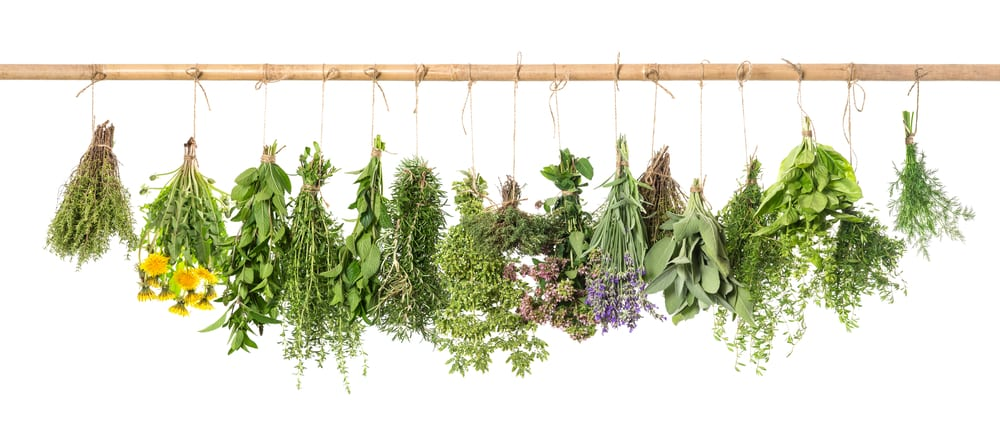 Types of Nutraceuticals: Traditional and Nontraditional